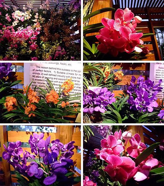 blog 花博 美術 寰宇庭園-泰國綺麗庭園中的祥和11.jpg