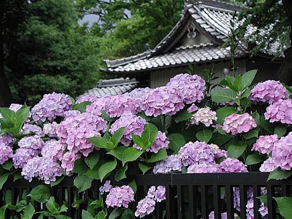圖片來源:http://nagoyaeventinformation.com/?p=143