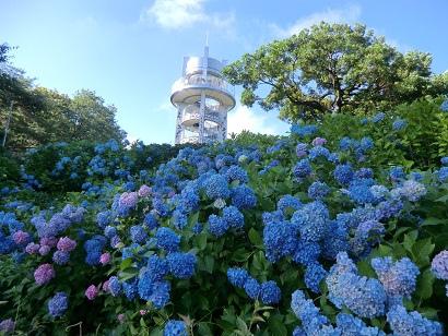圖片來源:http://www.city.komaki.aichi.jp/midori/park/shikinomori/010541.html