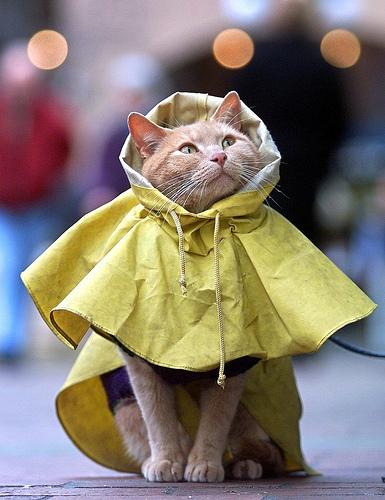 穿雨衣的貓