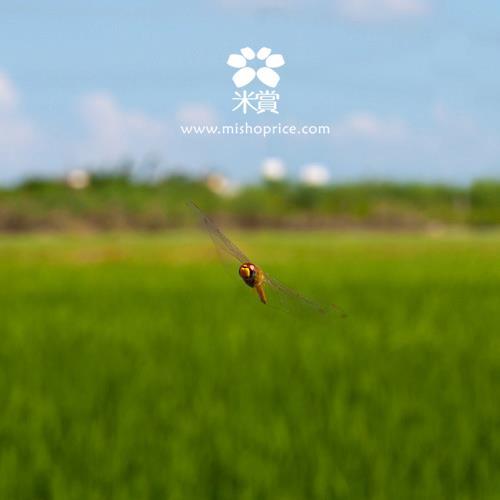 20110907 米小編被Hold住了 (3).jpg