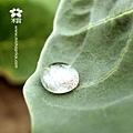 20120215 雨後田間風景 (1)