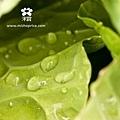 20120215 雨後田間風景 (6)