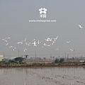 20120301 春耕田間紀錄 2  (5)