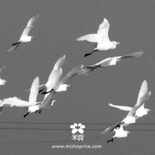 20120301 春耕田間紀錄 2  (10)