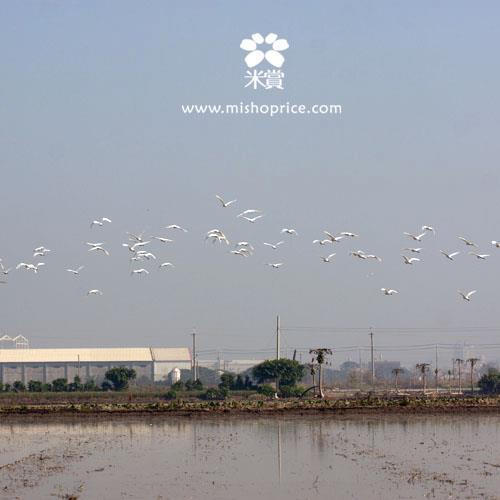 20120301 春耕田間紀錄 2  (12)