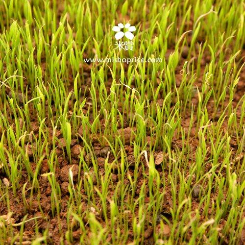 20120303 春耕田間紀錄 3 (16)