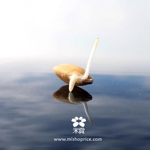 20120313 春耕田間紀錄 5 (6)
