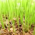 20120320 春耕田間記錄 6 (3)