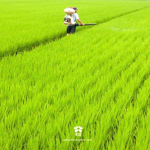 20120612 龍貓車經過稻田 (5)