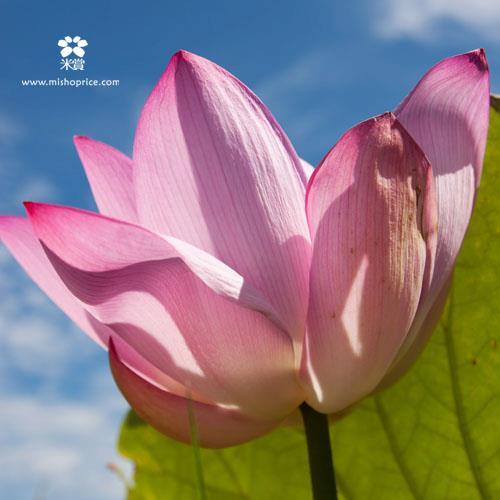20120702 享受樂天的人生 (4)