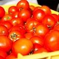 20130111 新鮮番茄駕到