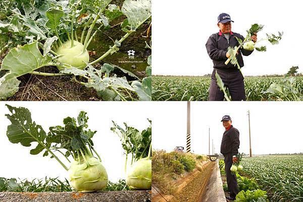 20130205 新鮮正熟的大頭菜