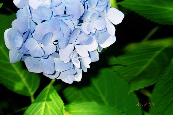 Victoria:布查花園