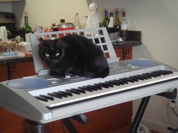 Saga 會彈琴