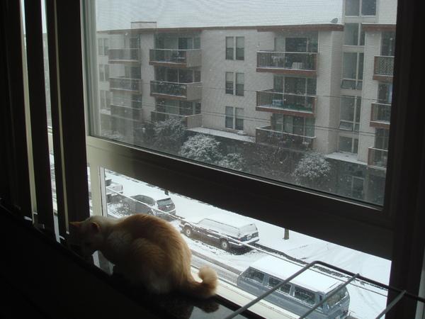 Miska 看雪