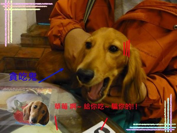 P1030224_640x480.jpg