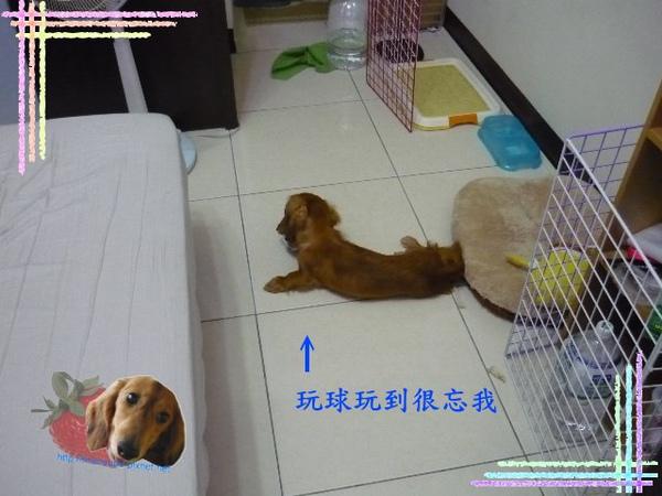 P1030969_640x480.jpg