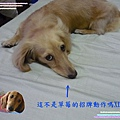 P1030971_640x480.jpg
