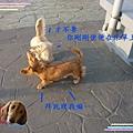 P1030976_640x480.jpg