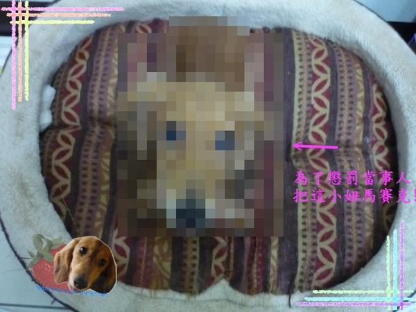 P1020473_640x480.jpg
