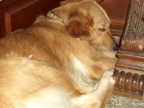 雖然我體積不小,可是我最喜歡縮在小角落睡覺嚕...zzZZZ