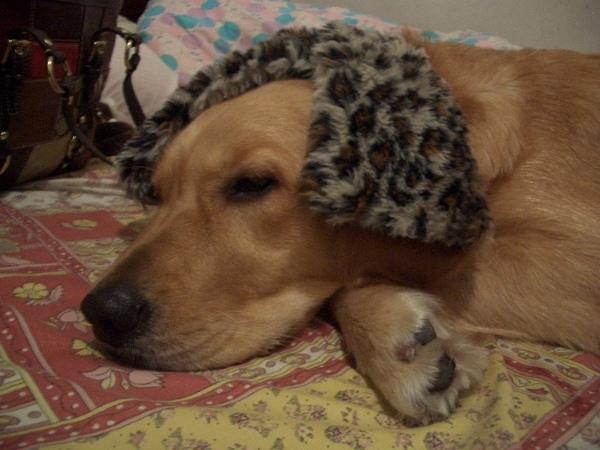 新年新造型--姊姊的豹紋圍巾真美麗耶~