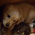 Sofi跟窩裡的一堆玩具