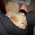 打迪的腳有特殊香氣很好睡.....