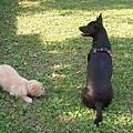 Sofi打完第一針預防針之後的公園初體驗