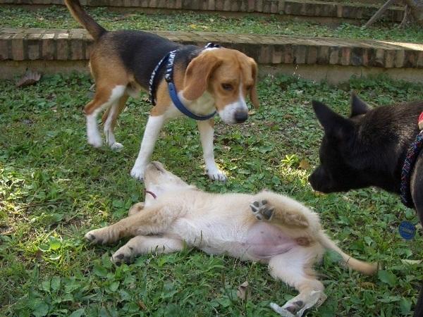 小ni:你拉耳朵我拉肥腿..數到三...