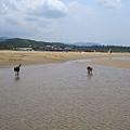 福隆--海天雲山狗兩隻