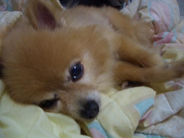咪咪在床上撒嬌裝可愛