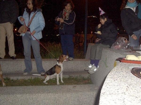 每隻狗狗都跟方婷要蛋糕吃