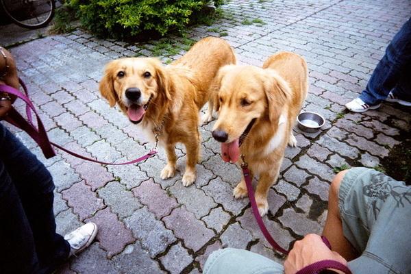兩匹狗排排站