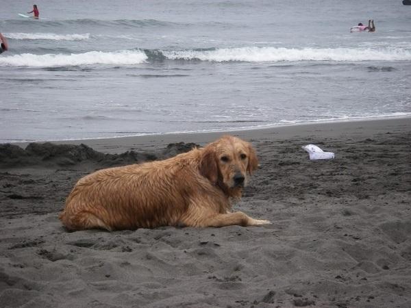 沙灘上更顯老態