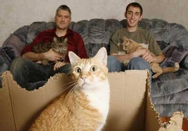 工程施養貓指南