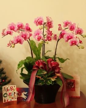 IMG_7587 升官的花