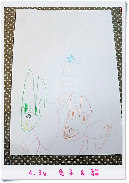 4.3y 兔子&貓