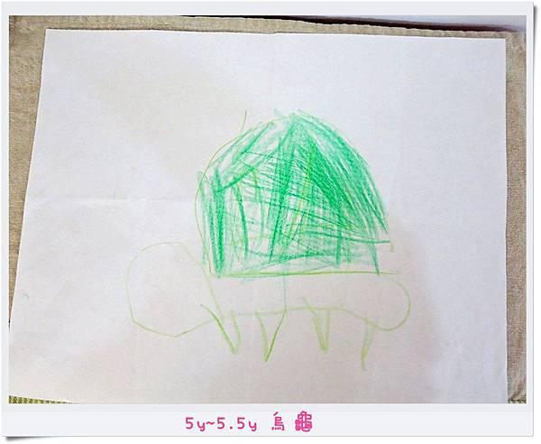 5y~5.5y 烏龜