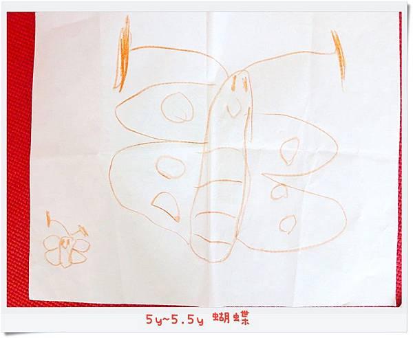5y~5.5y 蝴蝶