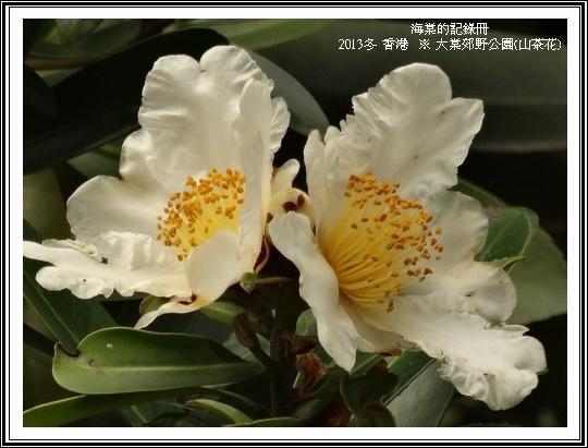 tn_DSC07656.JPG