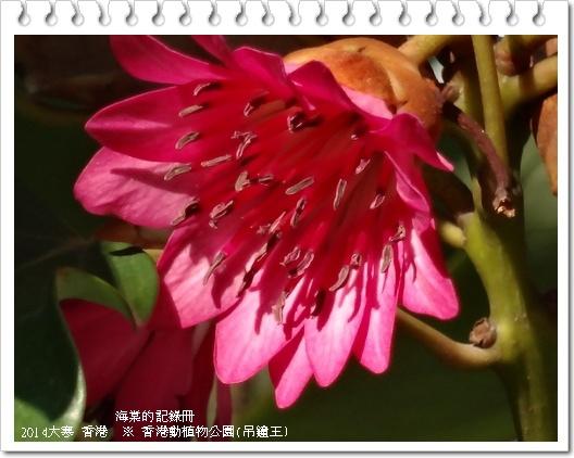 tn_image596.JPG