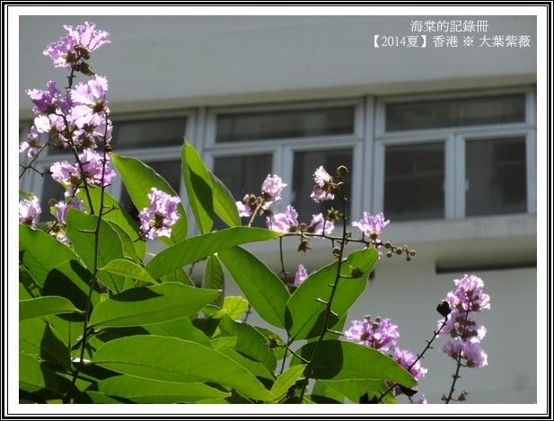 tn_DSC08810.JPG