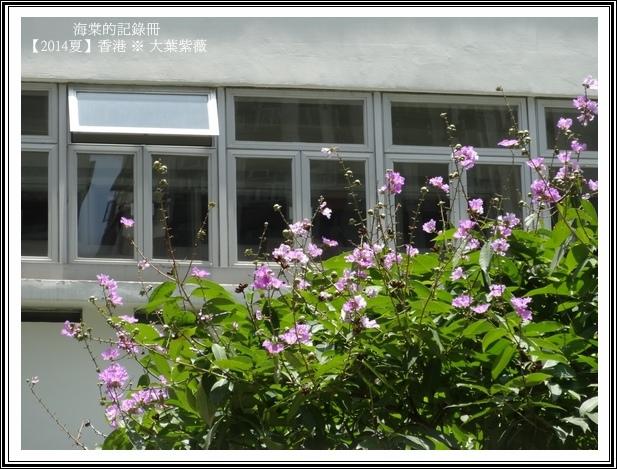 tn_DSC08819.JPG