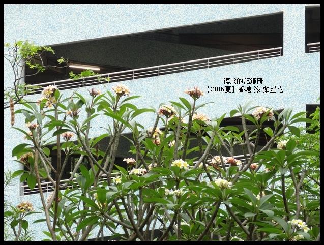 tn_DSC00968.JPG