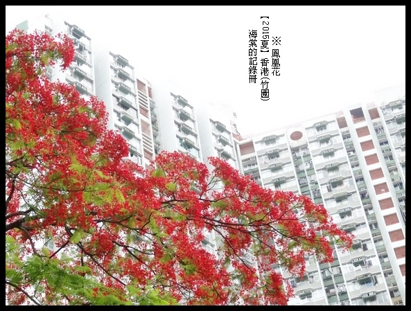 tn_DSC01329.JPG