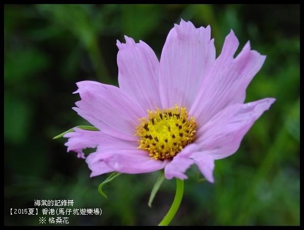 tn_DSC01481.JPG