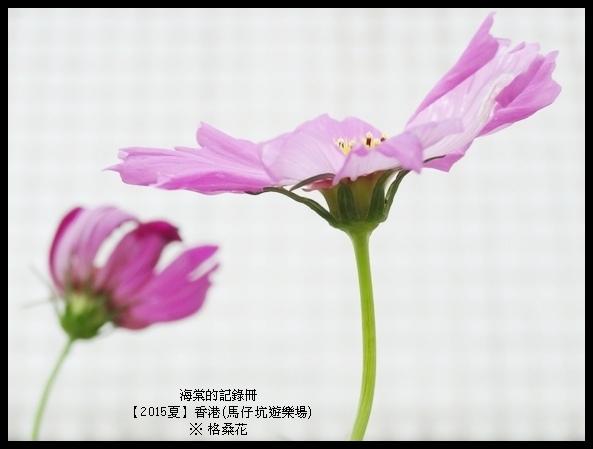 tn_DSC01493.JPG