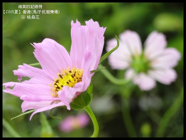 tn_DSC01494.JPG